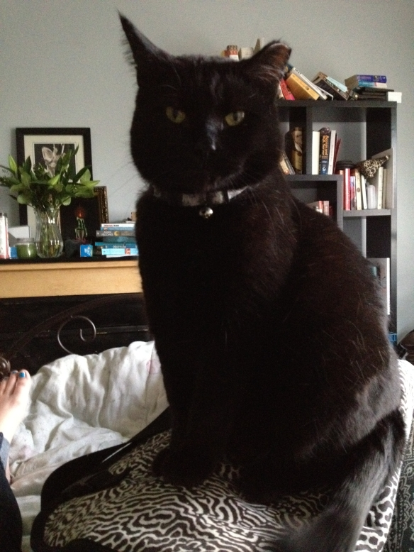 Serious black cat